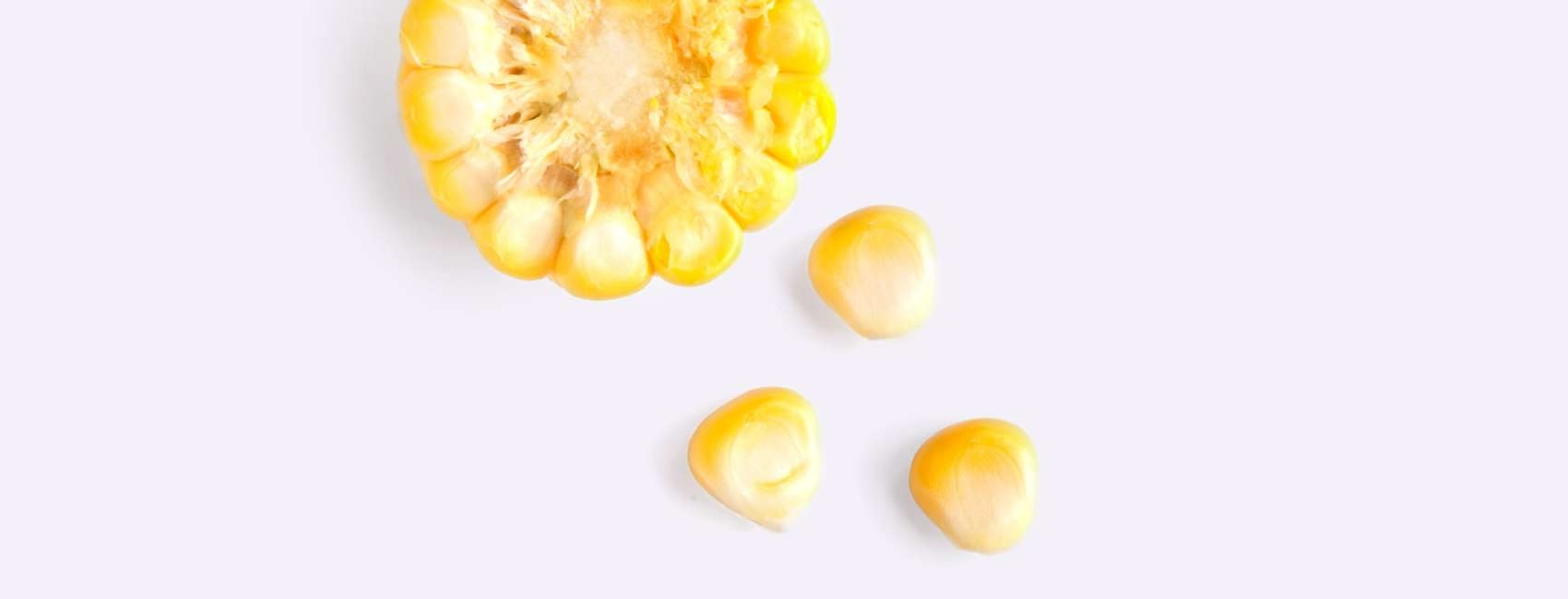 Corn kernels and cross section of husk on grey background