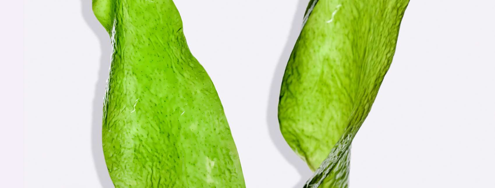 Cross section of green seaweed on grey background