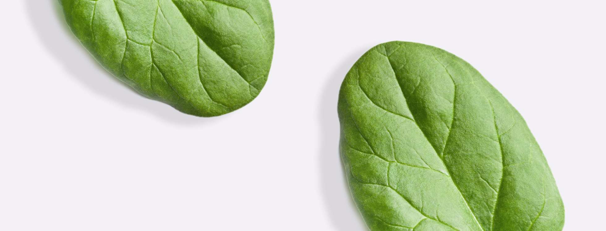 Spinach leaves on gray background