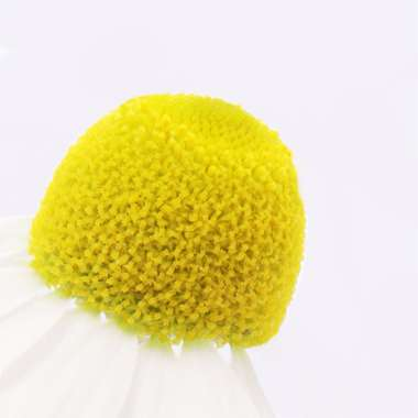Chamomille extract white flower yellow centre