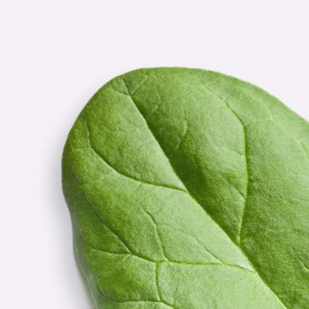 Vitamin E spinach leaf